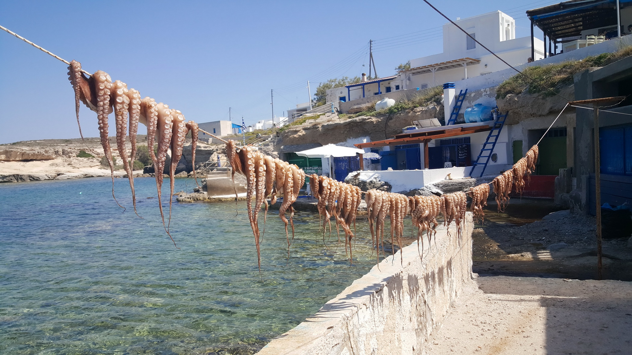 Octopus drying Greek travel